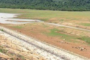 Bình Định: Phân vùng để cứu lúa