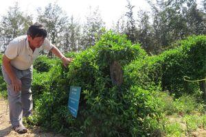 Phú Yên: Phát triển sản xuất dược liệu sạch