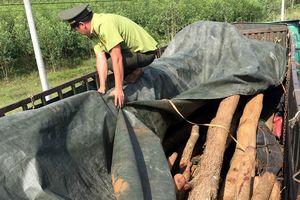 Giả mạo hồ sơ vận chuyển hàng chục cây gỗ quý trái phép