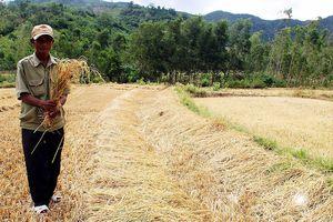 Nguy cơ thiếu đói bủa vây làng Giang