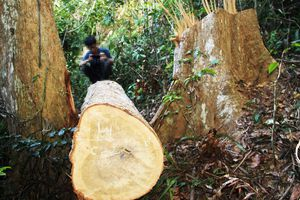 Khởi tố vụ 'xẻ thịt' rừng phòng hộ Vĩnh Sơn