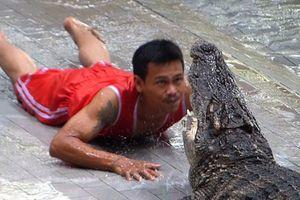 Cá sấu ngoạm gần đứt tay huấn luyện viên khi đang biểu diễn