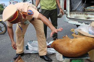 Bắt xe khách vận chuyển thịt động vật hoang dã
