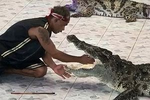 Huấn luyện viên suýt bị cá sấu cắn cụt tay vẫn hẹn ngày quay về sàn diễn