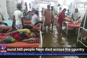 Cá bơi cùng bệnh nhân trong bệnh viện Ấn Độ
