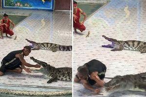 Kinh hoàng suýt bị mất cánh tay vì biểu diễn với cá sấu