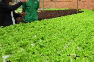 Đầu tư vào nông nghiệp: Sẽ lấy doanh nghiệp làm hạt nhân