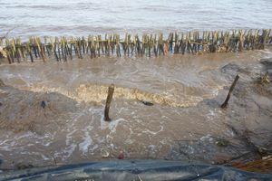 Khẩn cấp cứu hộ đê biển Tây tỉnh Cà Mau