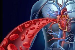 8 thực phẩm cải thiện quá trình lưu thông máu chống lại bệnh tật