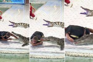 Thọc tay sâu vào họng cá sấu, huấn luyện viên bị cắn đến chảy máu