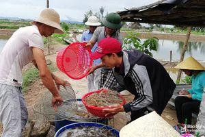 Người dân Diễn Châu khoan giếng lấy nước mặn ngầm để nuôi tôm