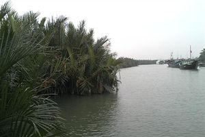Khám phá rừng dừa nước 200 tuổi ở Cẩm Thanh