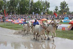 Độc đáo lễ hội đua bò An Giang