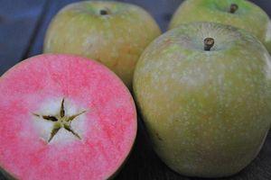 Tận mục giống táo hồng dễ thương đẻ ra tiền