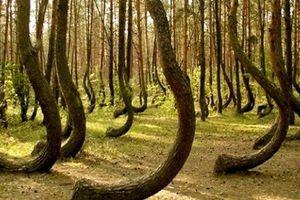 Cánh rừng ma quái 'ăn thịt người' kỳ bí nhất thế giới