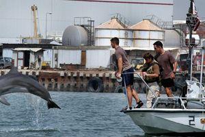 Mỹ dùng cá heo để bảo vệ kho vũ khí hạt nhân