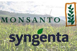 Syngenta nói không với đề nghị 45 tỉ USD của Monsanto