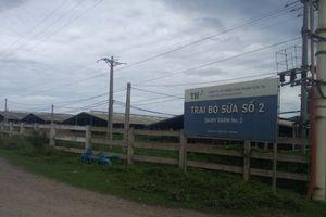 Trang trại bò sữa của TH True Milk: Gây ô nhiễm môi trường, ảnh hưởng nghiêm trọng đến cuộc sống của người dân