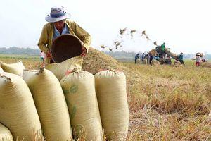 Sản xuất lúa gạo Việt Nam đang có nhiều cơ hội trong hoàn cảnh mới