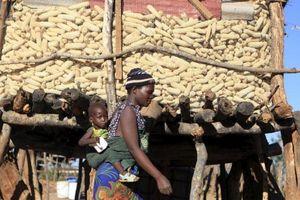 Tình cảnh bi đát của 4 nền kinh tế hàng đầu châu Phi