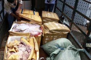 Phát hiện xe tải vận chuyển hơn 700 kg thịt heo hôi thối