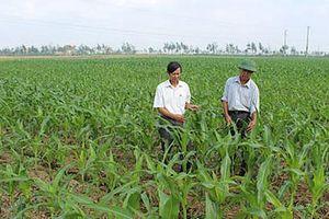 Diện tích đất trồng lúa sẽ giảm khoảng 100.000 ha