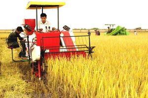 Khoa học công nghệ: 'Chìa khóa vàng' của ngành nông nghiệp