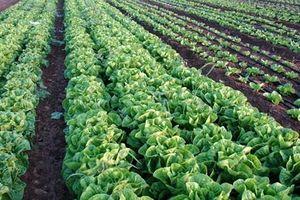 Một số giải pháp phát triển nông nghiệp đô thị theo hướng bền vững
