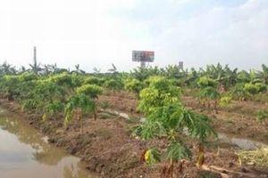 Đề nghị Chủ tịch UBND TP Hà Nội làm rõ những bất minh trong quản lý đất đai tại huyện Thường Tín
