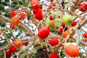 Những loại hoa quả có màu sắc kỳ lạ khó tin