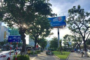 Đà Nẵng: Địa phương đầu tiên mua bảo hiểm cho cây xanh