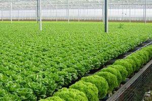 Sản xuất nông nghiệp hữu cơ còn nhiều vướng mắc