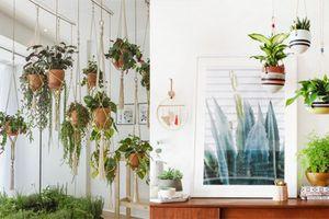 Trang trí nhà đẹp với những vườn hoa treo xinh xắn