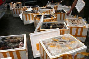 Hà Tĩnh: Bắt giữ xe khách chở 1 tấn chân trâu bò hôi thối đi tiêu thụ