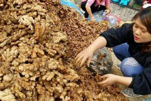 'Giải cứu' gừng Hà Giang: 10 tấn về tới Hà Nội, giá 10.000 đồng/kg