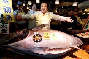 Cận cảnh phiên đấu giá cá ngừ 600.000 đô ở Nhật Bản
