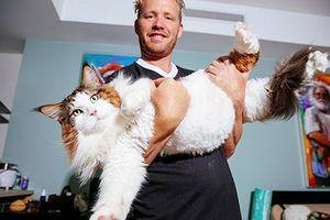 Gặp mèo khổng lồ nặng 13 kg dài 1,2m