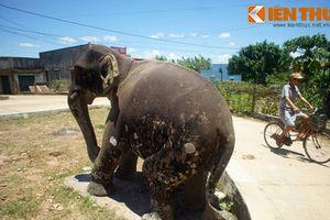Cặp voi đá cổ độc nhất vô nhị của vương quốc Chăm Pa