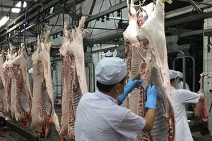 Xuất khẩu thịt lợn tìm 'cửa chính'