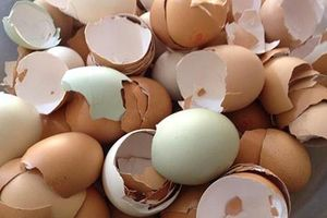 8 tác dụng tuyệt vời của vỏ trứng có thể bạn chưa biết