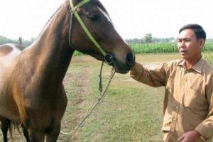 Nơi đàn ông mê ngựa hơn mê... vợ