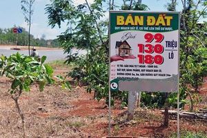 Biển rao bán đất trên cây dọc đường vành đai Buôn Ma Thuột