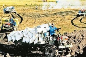Tích tụ ruộng đất để phát triển nông nghiệp bền vững (Kỳ 1)