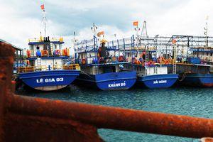 Đóng bằng thép Trung Quốc, tàu hàng chục tỷ nằm bờ