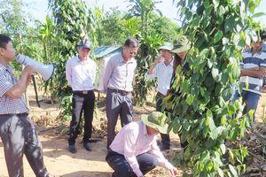 Tưới tiết kiệm cho cây trồng khô hạn