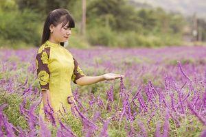 Sắc tím oải hương tại thung lũng hoa ở cao nguyên Lào Cai