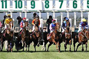Bổ sung quy định cho phép cá cược đua chó, đua ngựa và bóng đá quốc tế vào Luật