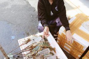 Tôm hùm 'chạy' bão từ miền Trung vào Sài Gòn, người nuôi vừa bán vừa khóc