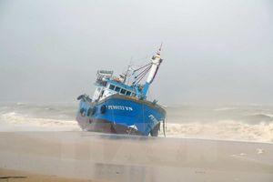 Vì sao bão số 12 gây thiệt hại lớn?