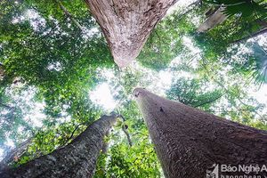 Phát triển rừng bền vững, giảm phát thải khí nhà kính ở Nghệ An